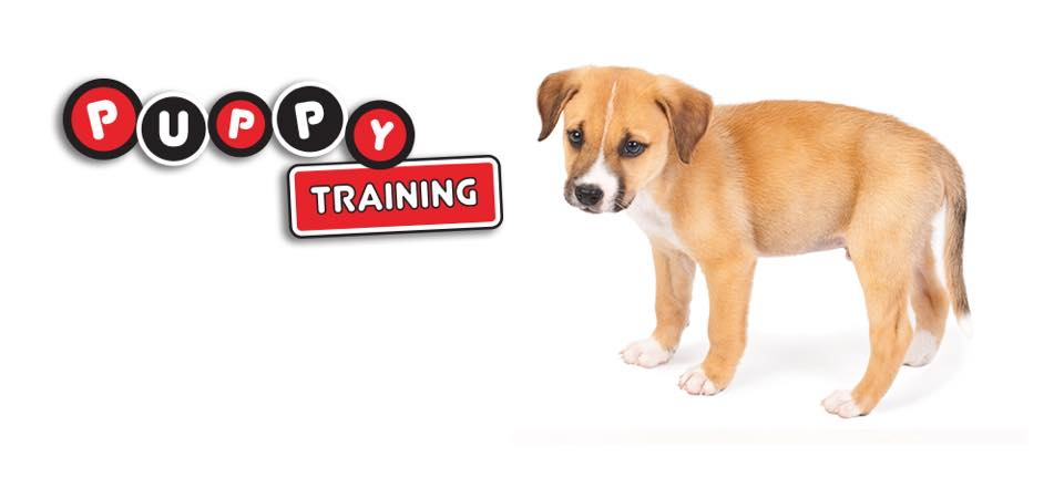 Puppy Training COLUMBUS, OHIO